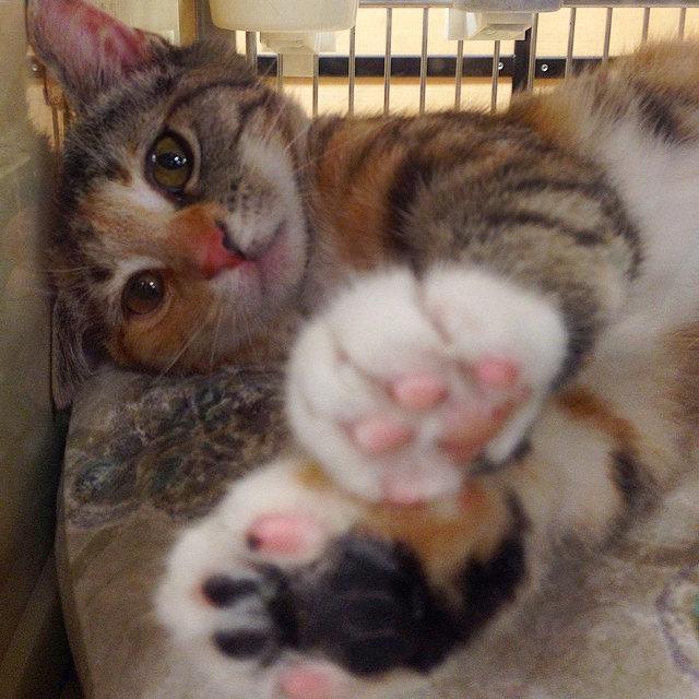 Кошачьи проблемы: Вопросы-ответы