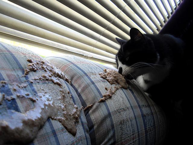 Кота рвет с глистами что делать