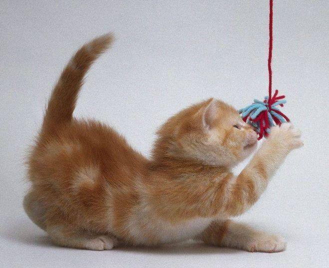 Как сделать игрушку своими руками для котенка из бумаги