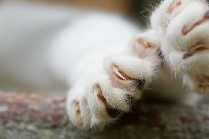 Как часто стричь когти кошке