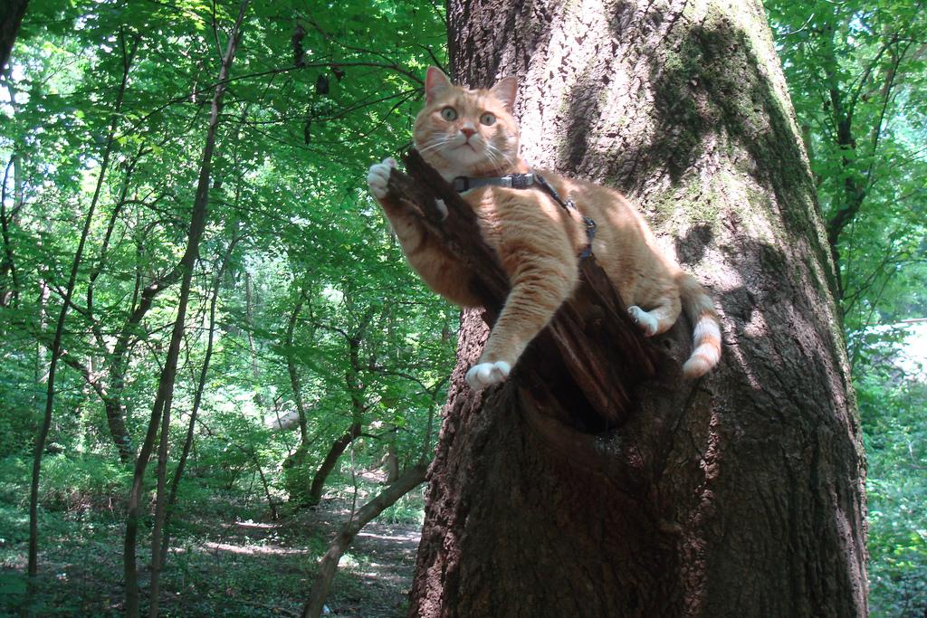 Ошейник GPS Для кошек