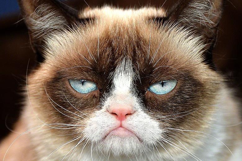 http://www.usatiki.ru/files/images/grumpy-cat.jpg